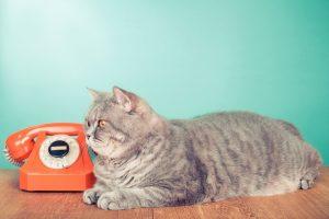 FeLV: Feline Leukemia Virus | Animal Care Center of Fort